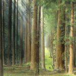 No. 3 - Redwood Forest G. C.